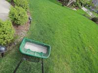 Why Should I Have My Lawn Fertilized?